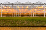 Greenhouse Growing Basics: Choosing The Right Lighting For Your Greenhouse