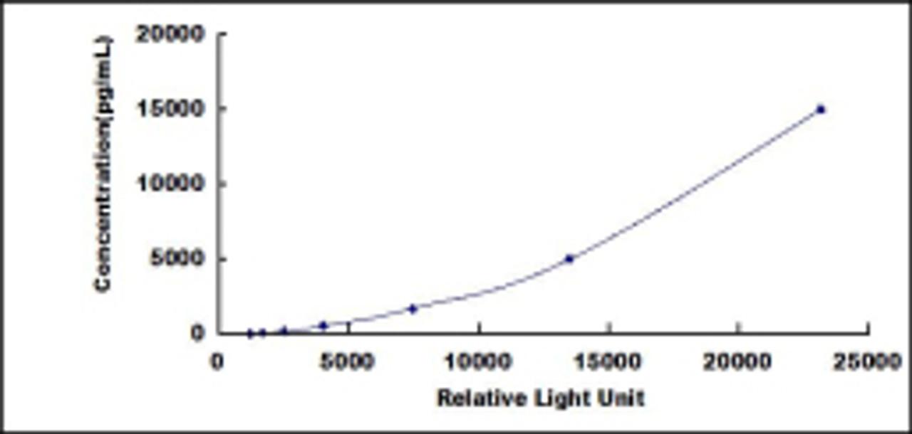 Rat Ubiquitin Carboxyl Terminal Hydrolase L1 (UCHL1)CLIA Kit