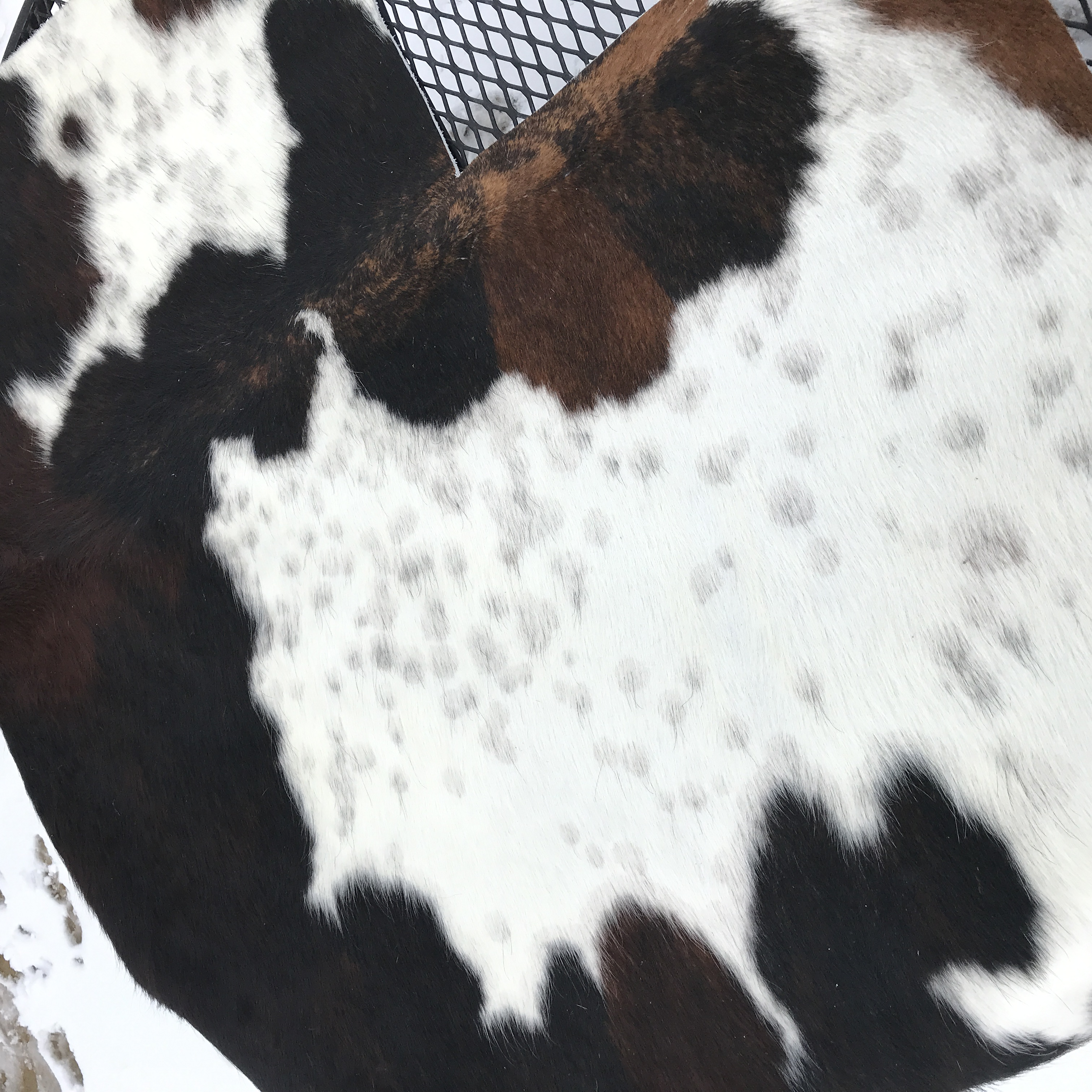 large spot columbian cowhide