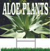 Very Colorful Aloe Plants Yard Sign draws in shoppers.