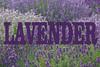 Lavender Flowers GB 177