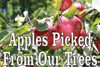 Apples Picked From Our Trees Nice Farmers Market Banner.