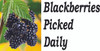 Fruit Banner - Blackberries Inviting Customers to Stop In.