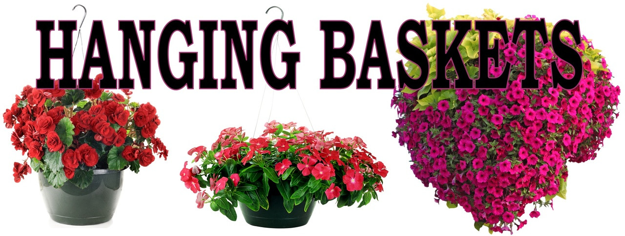 Hanging Basket 3ftx8ft Banner Extremely Colorful!