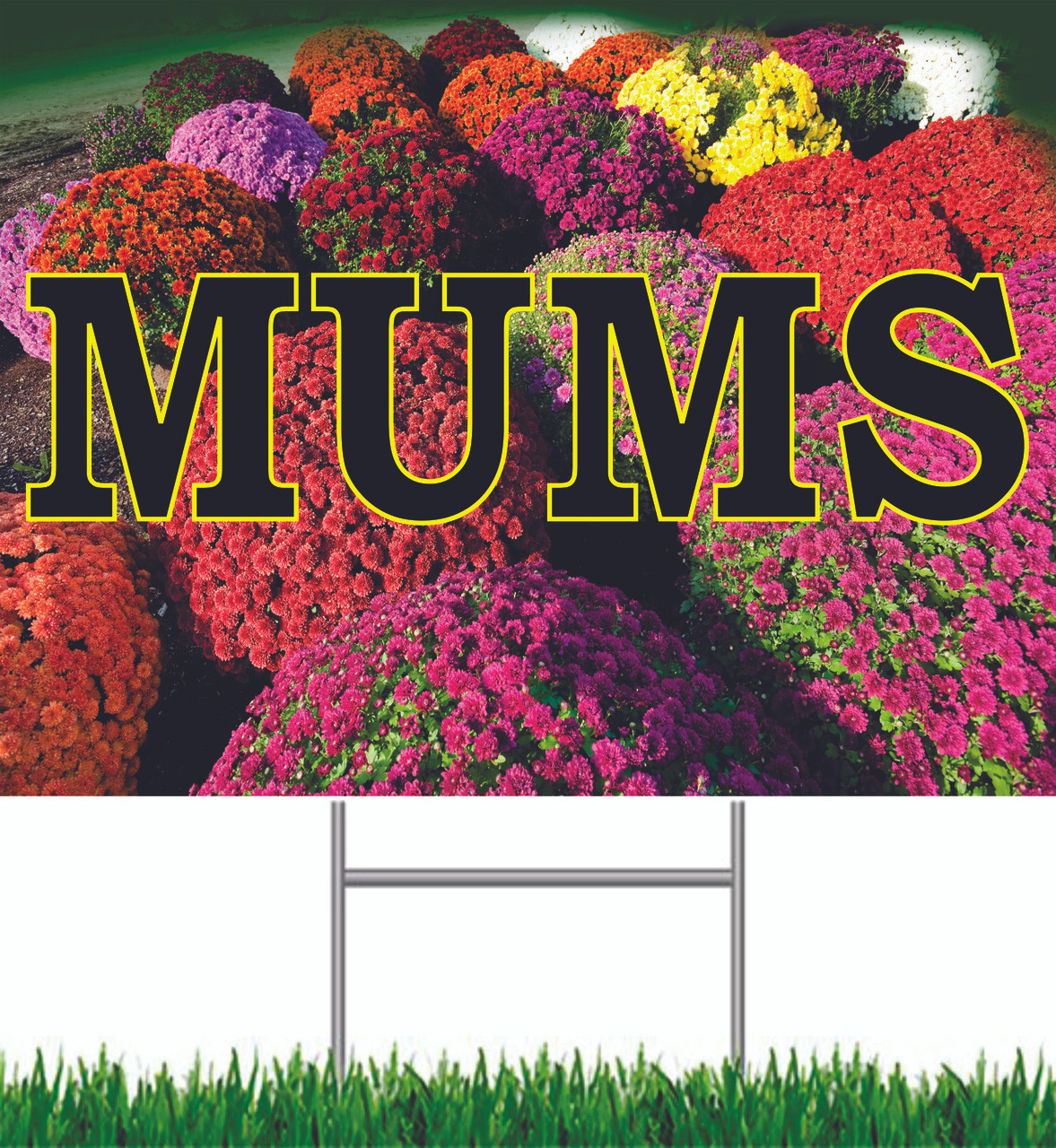 Mums Yard Sign Beautiful Color.