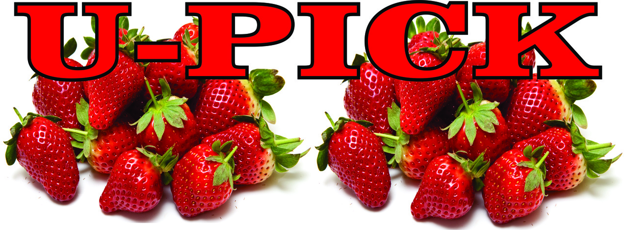 U-Pick Strawberries Banner It's Very Inviting.