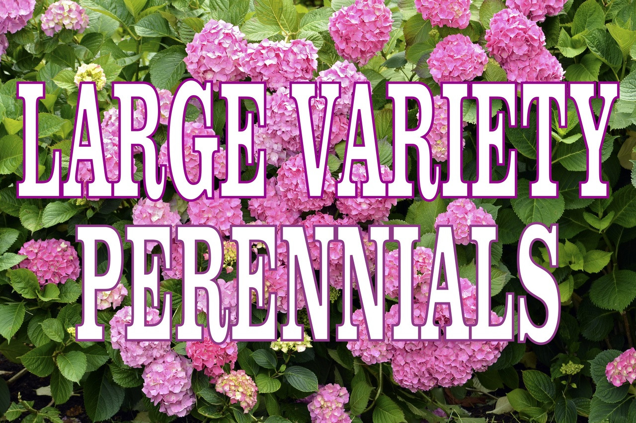 Large Variety Perennials Banner Draws in Shoppers.