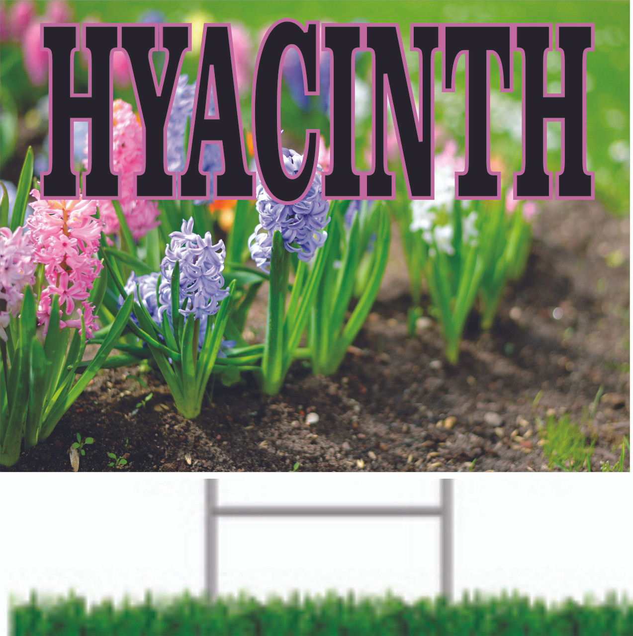 Hyacinth Yard Sign is Colorful & Inviting.