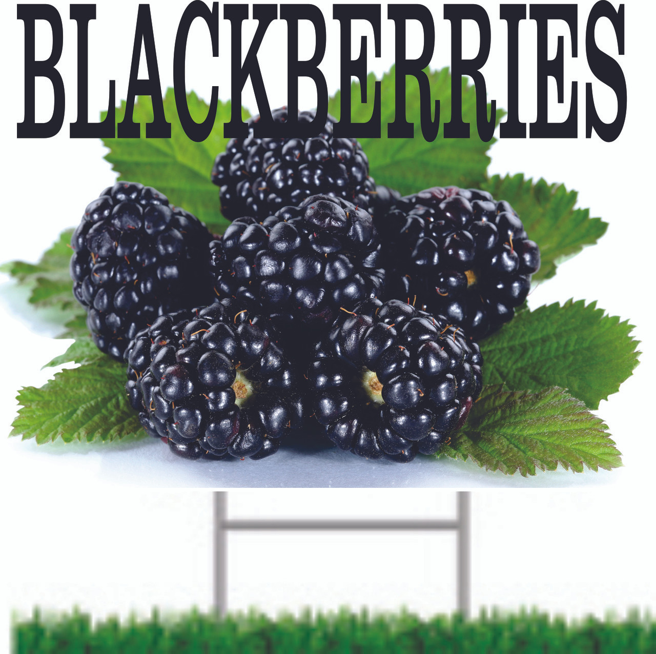 Blackberries Yard/Road Sign Nice for Farm Stand or Farmers Markets.
