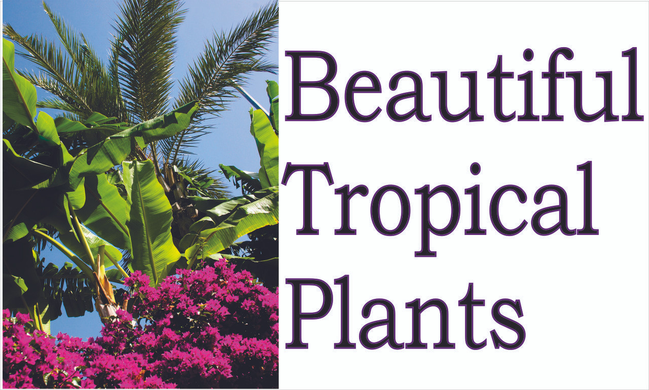 Beautiful Tropical Plants Banner For Produce Stands