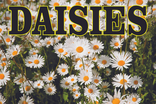 Daises Flower & Garden Center Banner Gets Noticed.