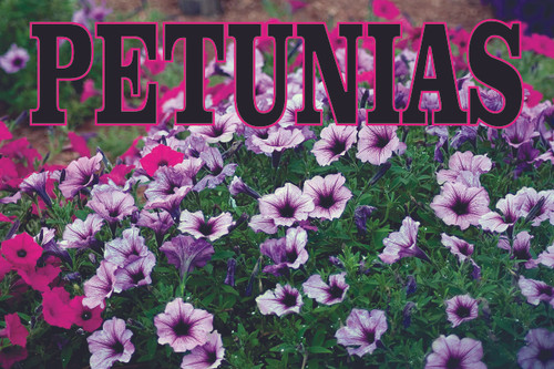 Petunias Garden Center Banner draws in customers.