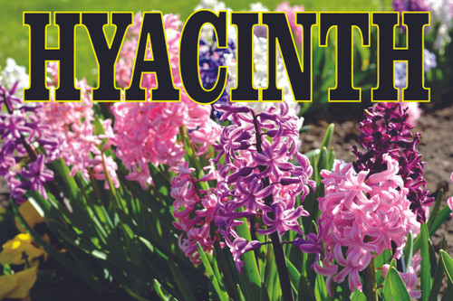 Beautiful Hyacinth Banner Will Invite Customers In.