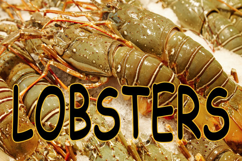 Lobster On Ice Banner full Color.