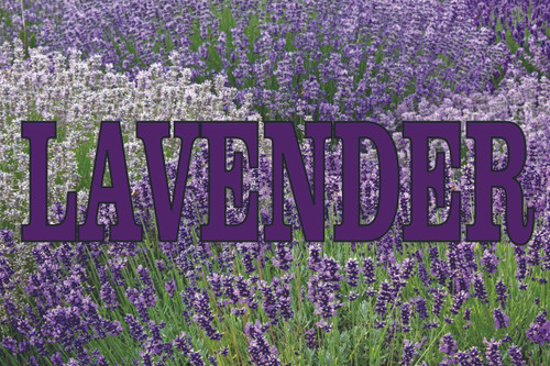 Lavender Flowers GB 177