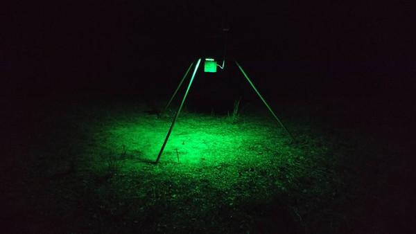 SPORTSMAN Solar Powered Motion Activated Feeder Light (Green)