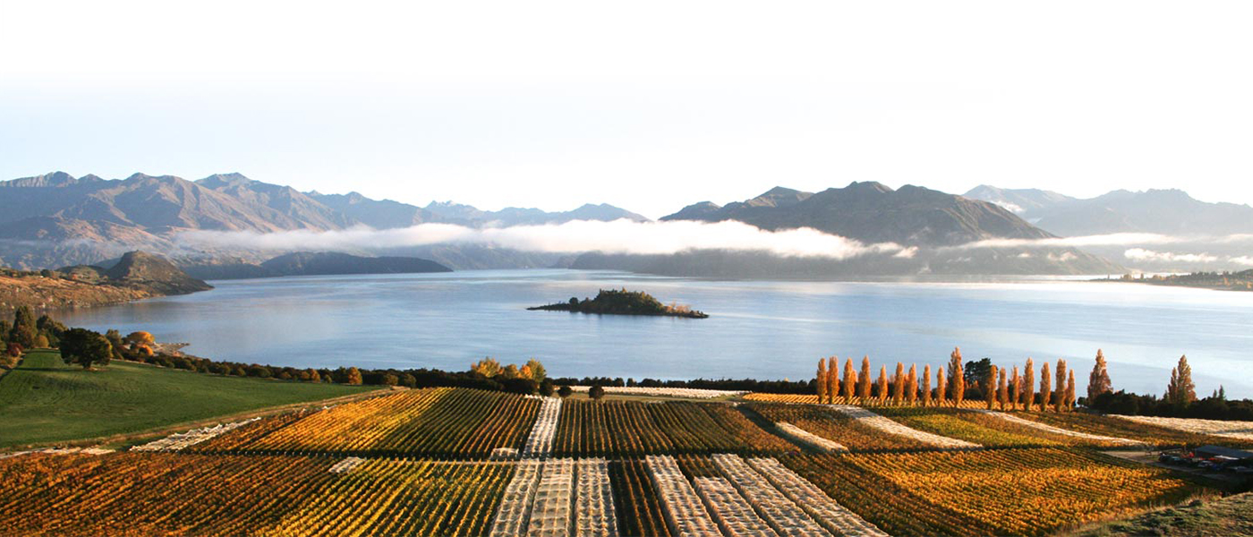 Buy New Zealand wine direct with delivery to over 40