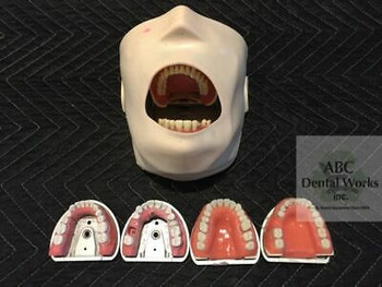 Kavo Jaw, Skin, With Typodents, Extra Modupro Carrier Trays, Pros Modules, More