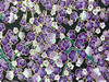 Purple Cherry Blossom