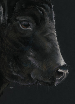 Black Angus artwork by Kay Johns