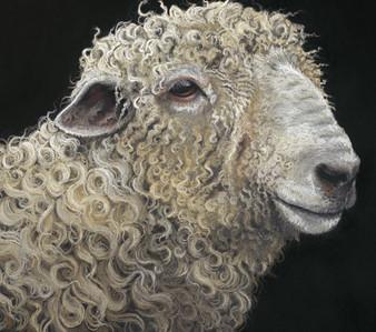 Lincoln Longwool Ram artwork by Kay Johns