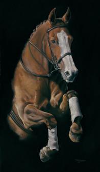 Bay equestrian horse artwork by Kay Johns