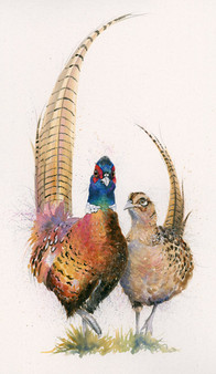 Pheasant painting by Kay Johns