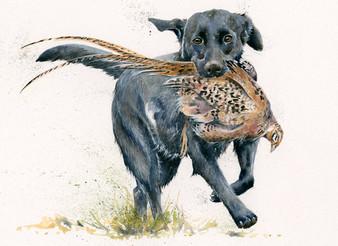 Labrador painting by Kay Johns