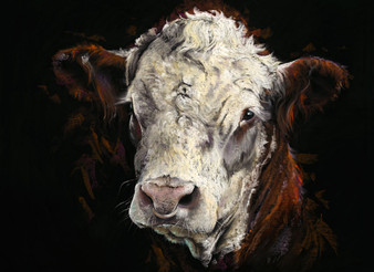 Hereford Bull painting by Kay Johns