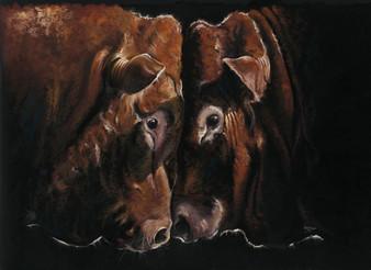 Limousine livestock artwork by Kay Johns
