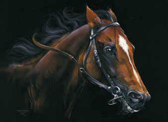 Thoroughbred artwork by Kay Johns