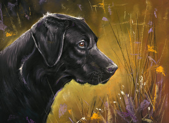 Labrador artwork by Kay Johns