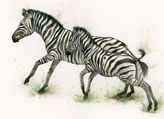 Zebra artwork by Kay Johns