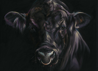 Black Angus Bull Artwork by Kay Johns