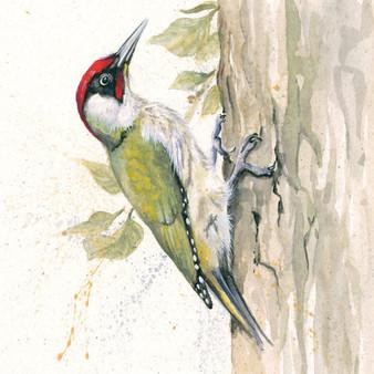 Green Woodpecker original by Kay Johns