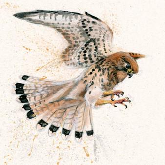 Kestrel original Artwork by Kay Johns
