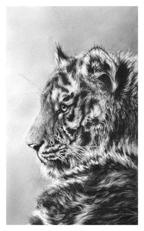 Amur tiger drawing by Jamie Boots