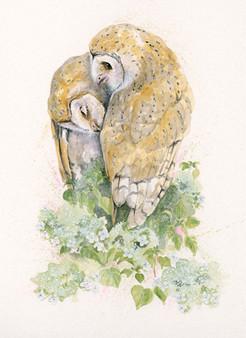 Original barn owl artwork by Kay Johns