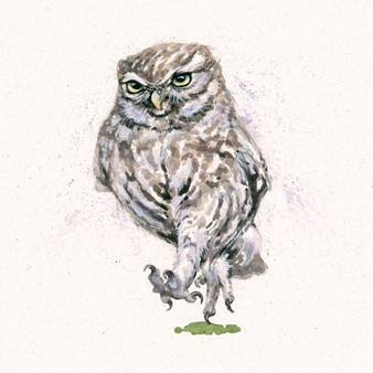 Original Little owl with attitude artwork by Kay Johns