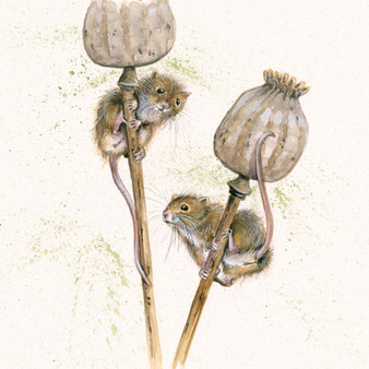 Harvest mice original artwork by Kay Johns