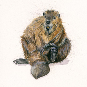 Original beaver artwork by Kay Johns