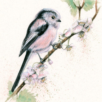Long Tailed Tit artwork by Kay Johns