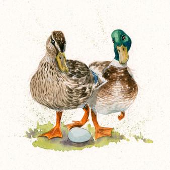Mallard duck original artwork by Kay Johns
