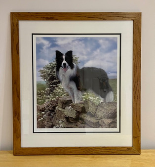 Border Collie artwork by Steven Townsend
