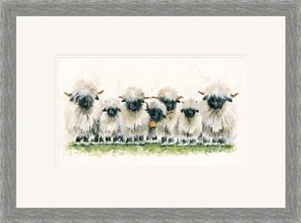 Swiss Valais black nosed sheep grey small framed