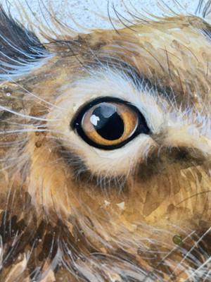 Eye Eye... 'ears the start of something special...