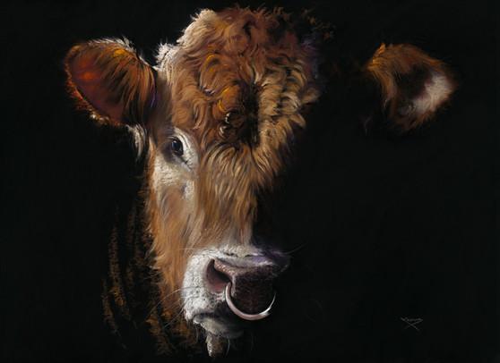 South Devon Bull by Kay Johns