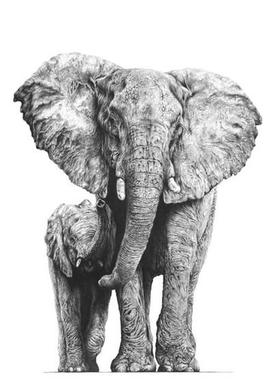African Elephant artwork