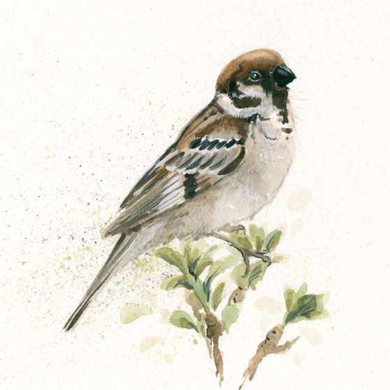 Sparrow artwork, painting by Kay Johns