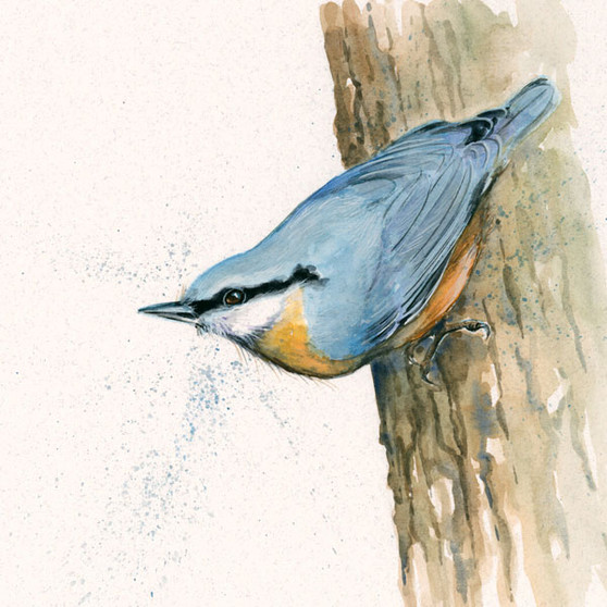 Nut Hatch artwork painting by Kay Johns
